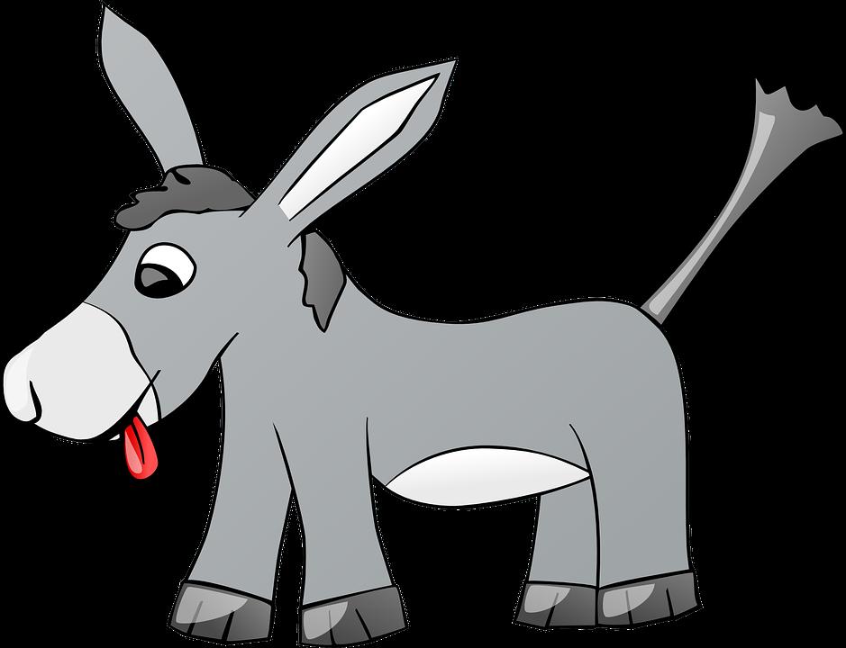 布里丹毛驴效应,你知道什么意思吗?